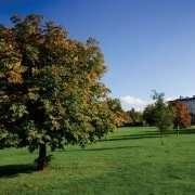 Armagh Palace Demesne, Armagh