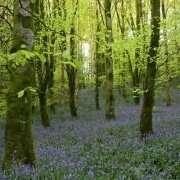 Rossmore Forest Park, Monaghan
