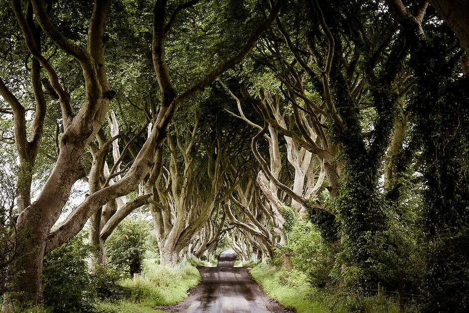 Dark Hedges - Irland