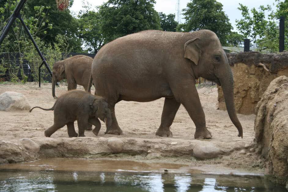 Dublin Zoo - Irland