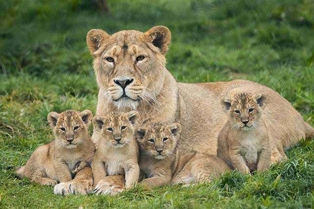 Fota Wildlife Park - Irland