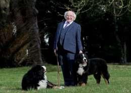 Berner Sennenhund - irischer Präsident - Irland